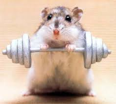 Hamster strong